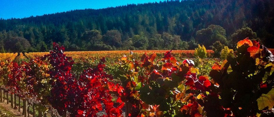 Philo Vineyard in Fall